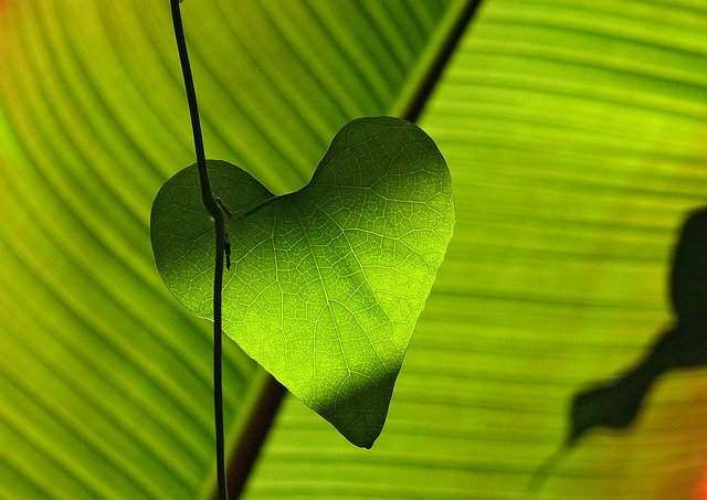 list ve tvaru srdce