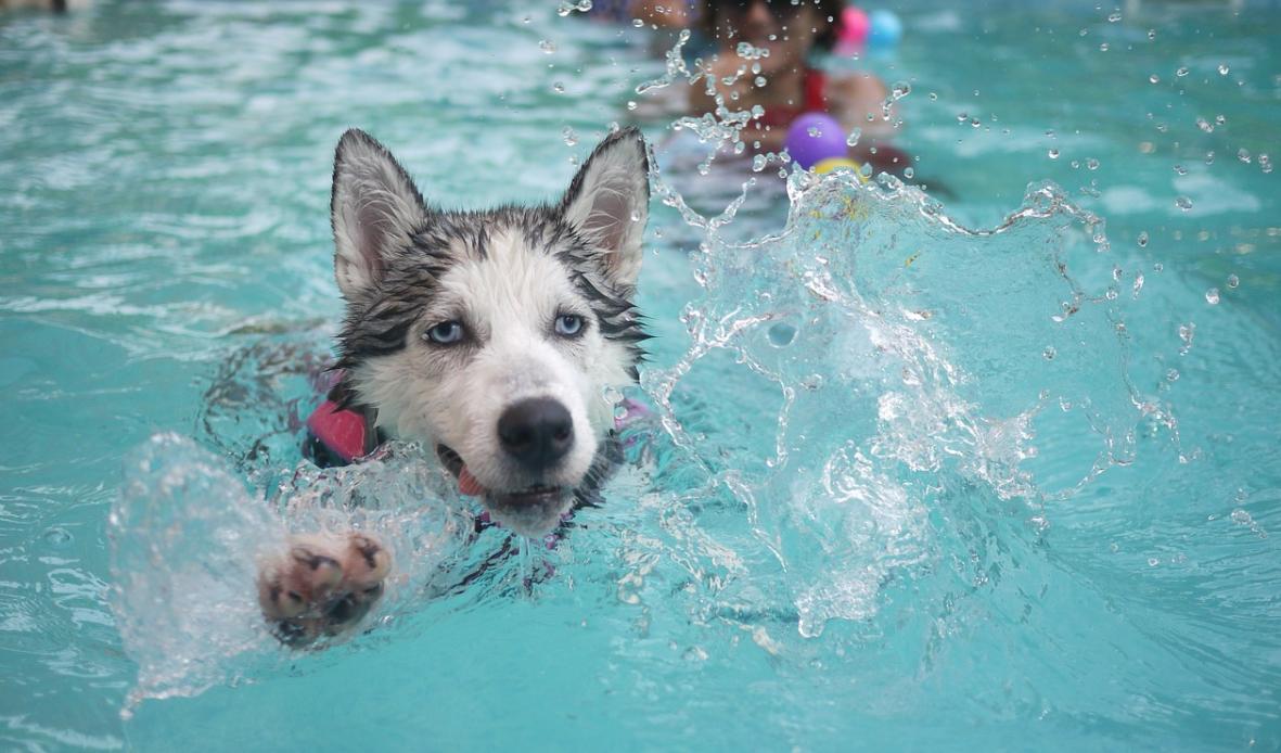 pes a bazé